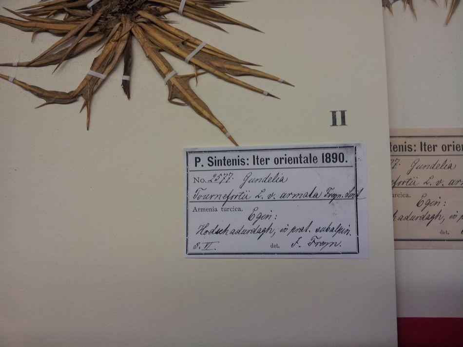 Çalışmalarımız flora (61)